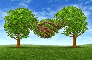 trees holding hands with branches